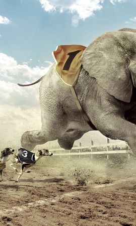 61414 download wallpaper Animals, Race, Competition, Dog, Elephant, Sand, Track, Sky, Cloud, Fangs, Heat, House, Building, Glass, Lanterns, Lights, Grass, Fence screensavers and pictures for free