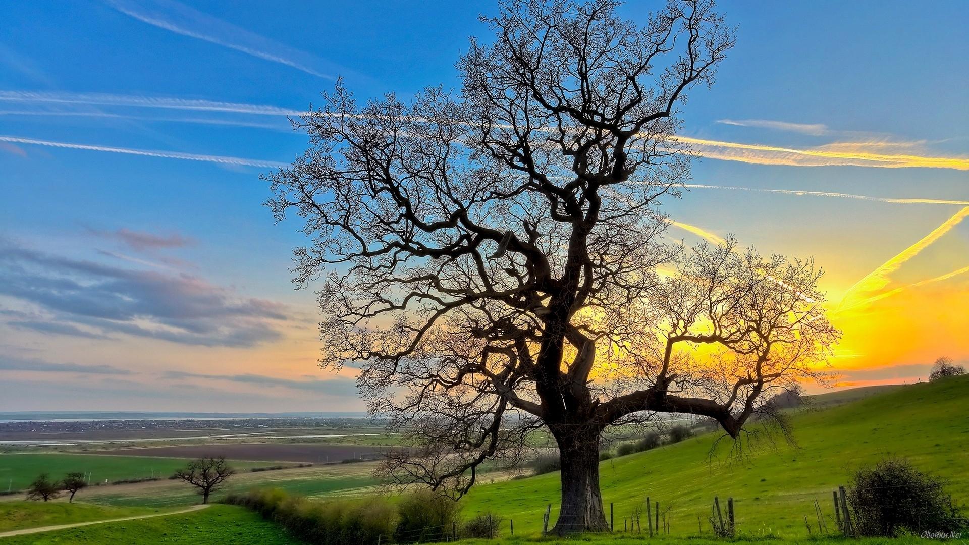 25648 скачать обои Пейзаж, Деревья, Поля, Небо - заставки и картинки бесплатно