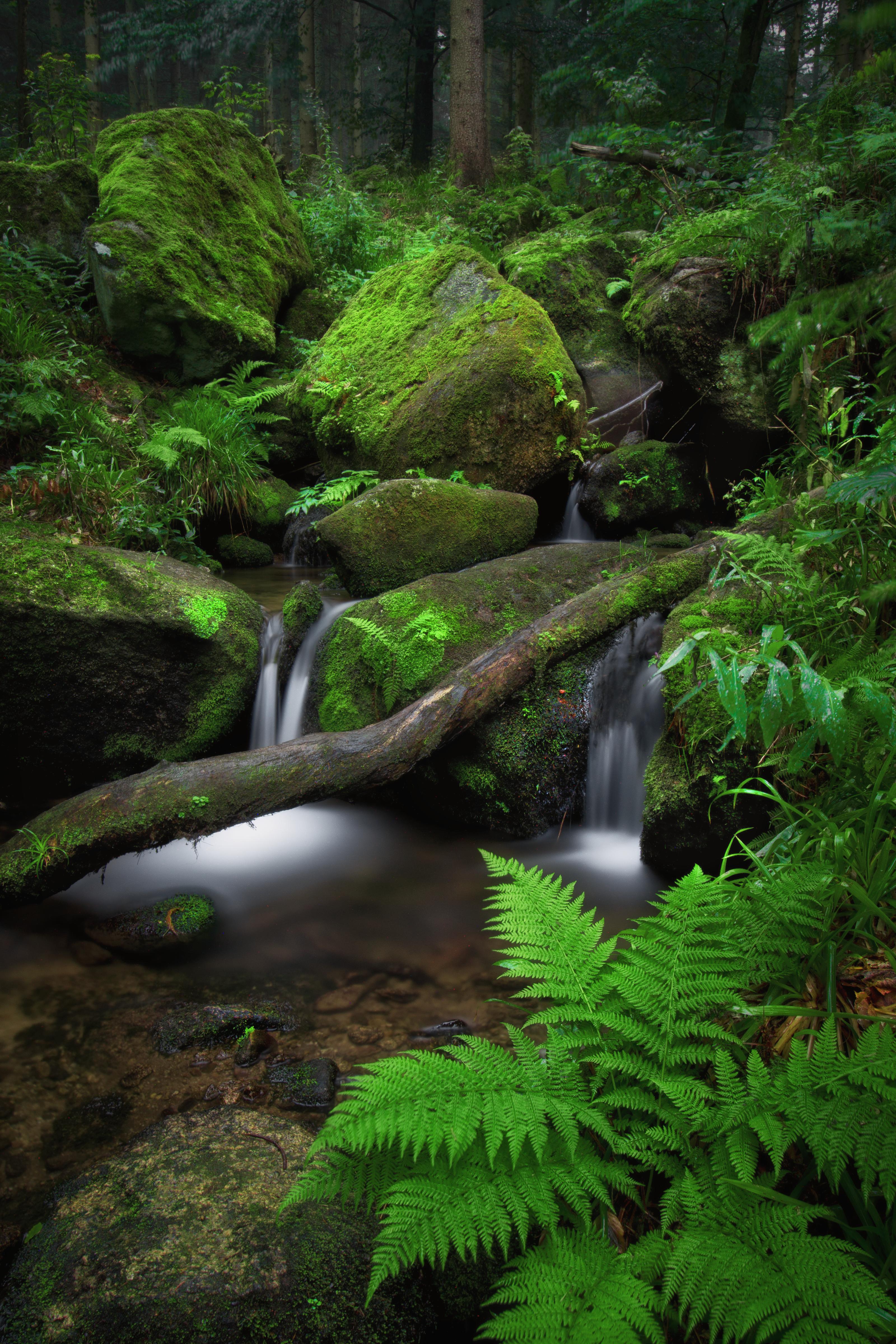 124761 скачать обои Камни, Папоротник, Водопад, Природа, Мох - заставки и картинки бесплатно