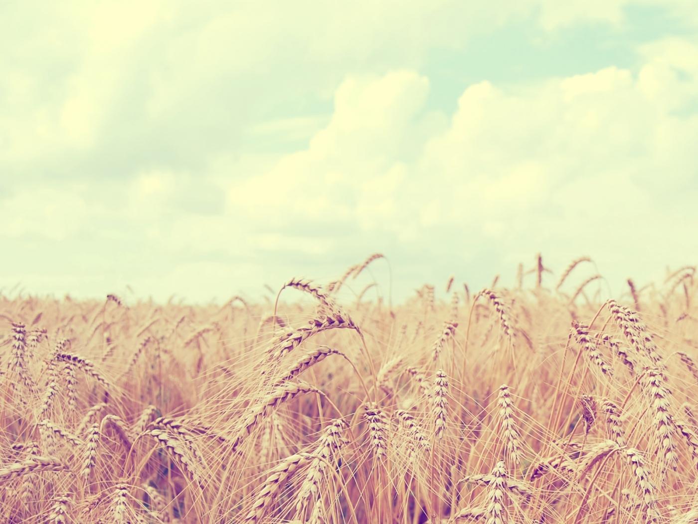 46332 скачать обои Пейзаж, Природа, Поля, Пшеница - заставки и картинки бесплатно