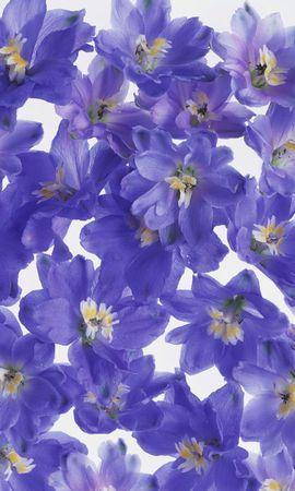 4647 скачать обои Растения, Цветы, Фон - заставки и картинки бесплатно