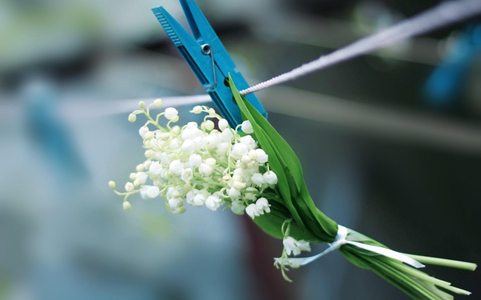 47390 скачать обои Растения, Цветы, Букеты - заставки и картинки бесплатно