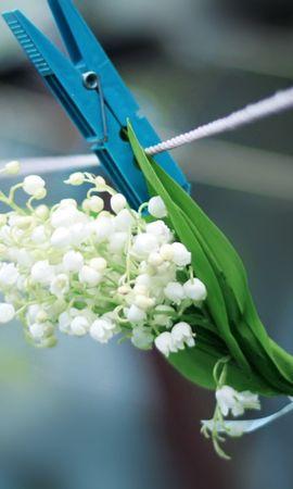 47390 télécharger le fond d'écran Plantes, Fleurs, Bouquets - économiseurs d'écran et images gratuitement