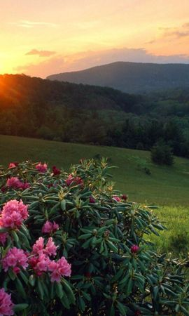 11172 descargar fondo de pantalla Plantas, Paisaje, Flores, Sol: protectores de pantalla e imágenes gratis