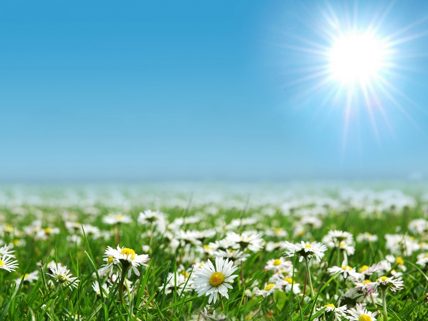 26719 download wallpaper Landscape, Flowers, Fields, Sun, Camomile screensavers and pictures for free