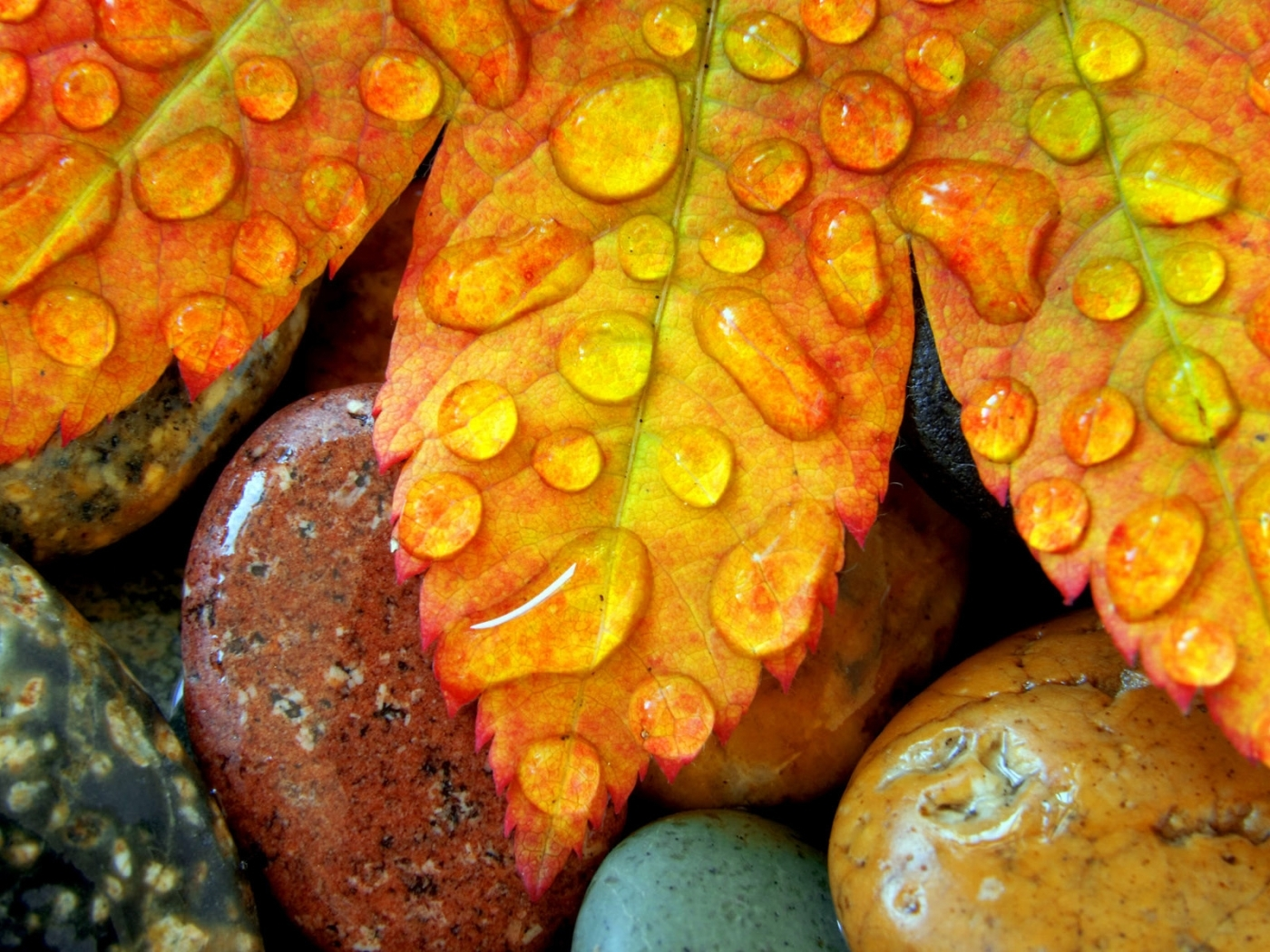 31064 download wallpaper Background, Stones, Leaves, Drops screensavers and pictures for free