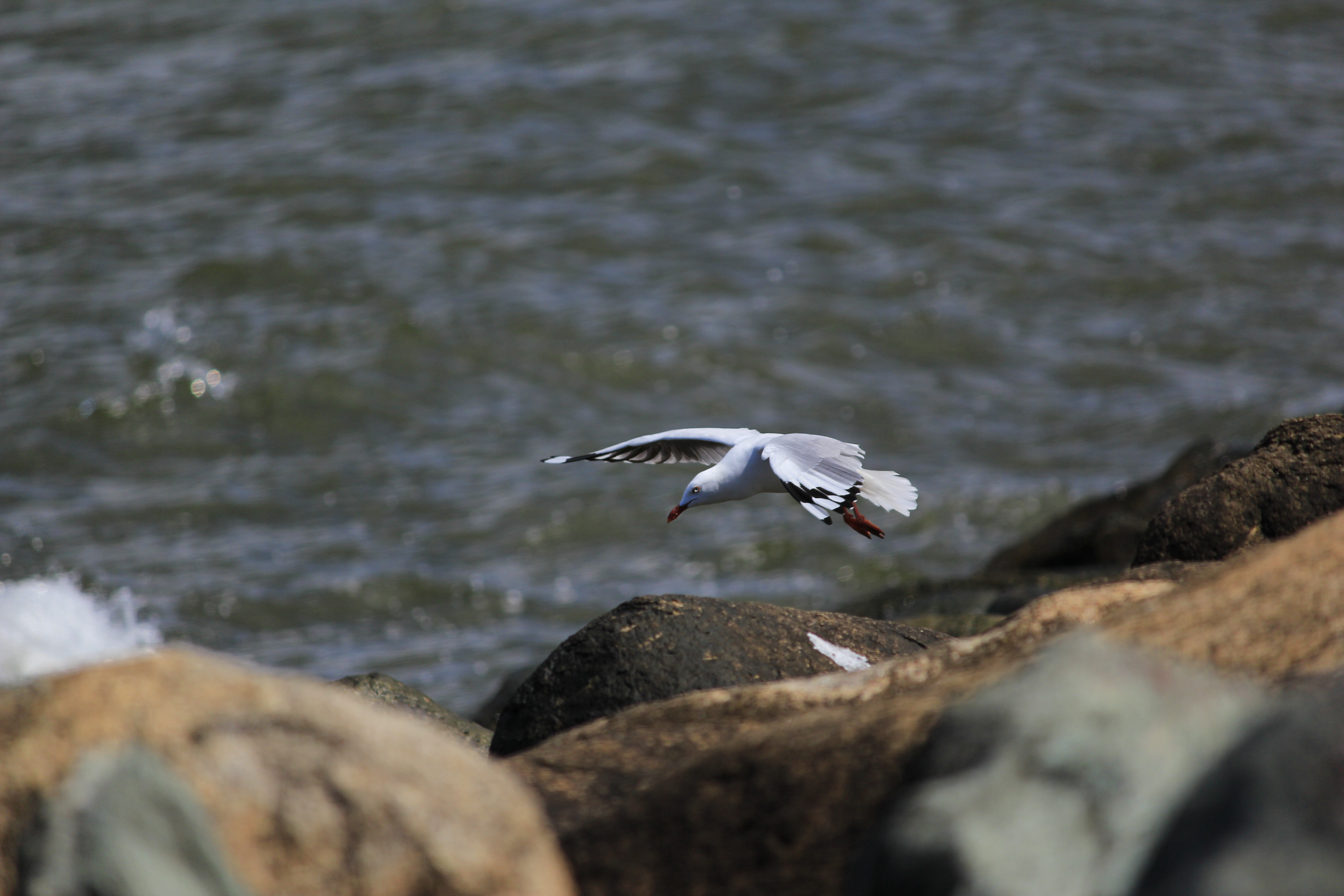 112075 download wallpaper Animals, Gull, Seagull, Bird, Flight, Sea, Stones screensavers and pictures for free