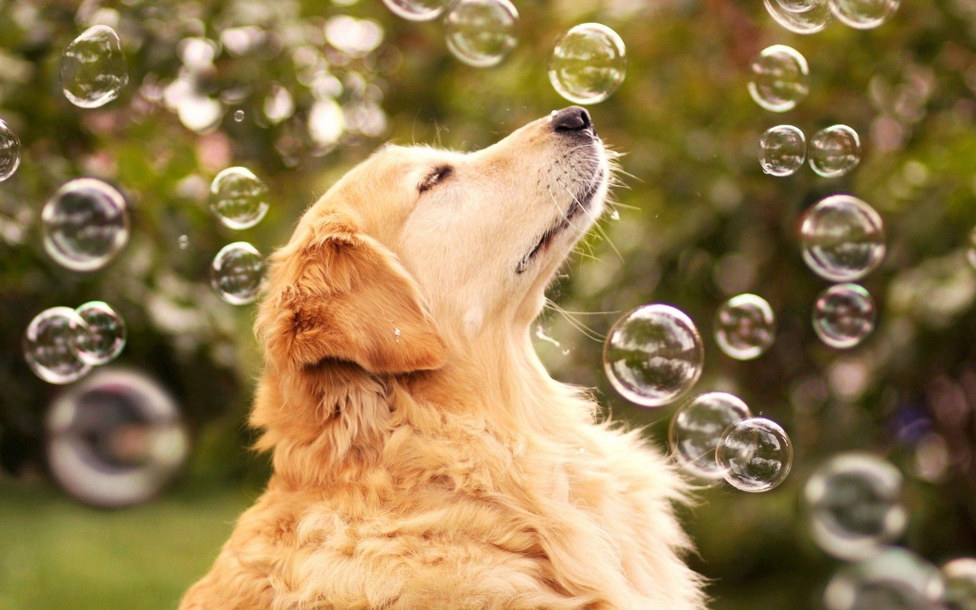 102055 download wallpaper Animals, Dog, Bubble, Bubbles, Sight, Opinion screensavers and pictures for free