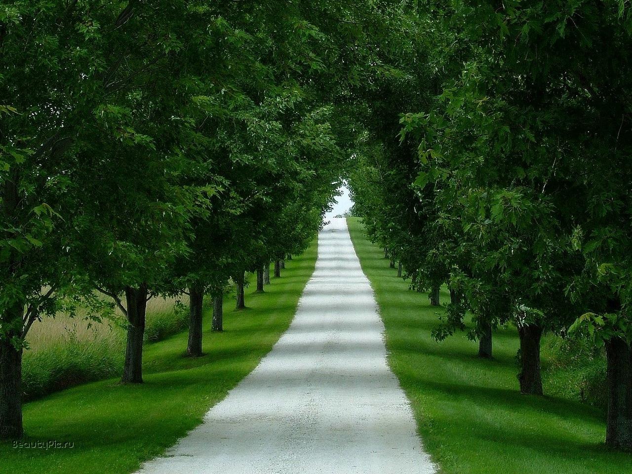 4534 скачать обои Пейзаж, Деревья, Дороги - заставки и картинки бесплатно