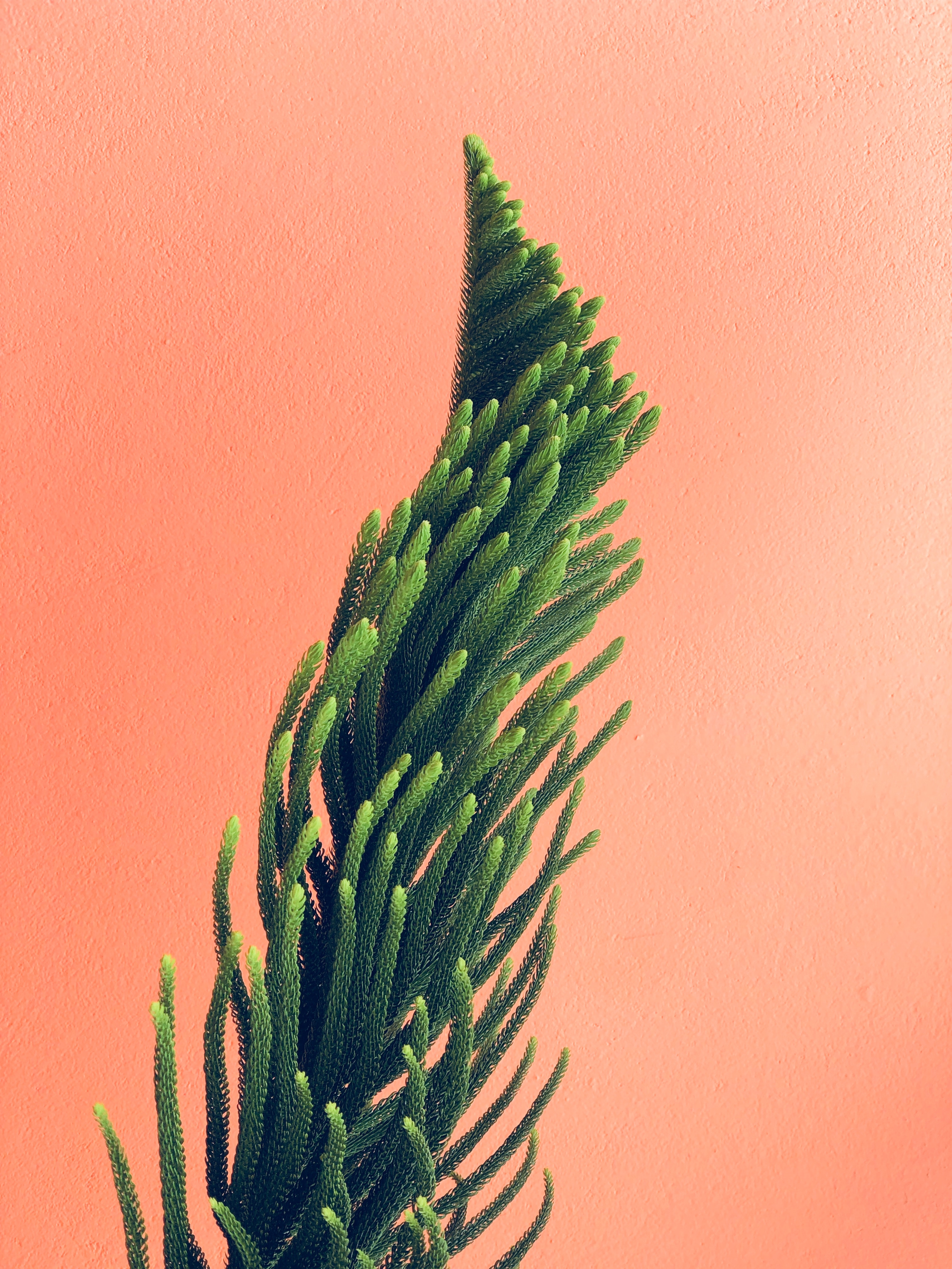 99010 Screensavers and Wallpapers Wall for phone. Download Minimalism, Needle, Plant, Branches, Wall pictures for free