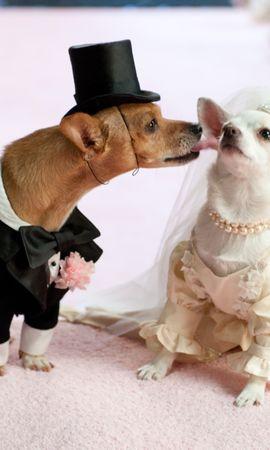 60538 Заставки и Обои Свадьба на телефон. Скачать Животные, Собаки, Пара, Свадьба, Костюм картинки бесплатно