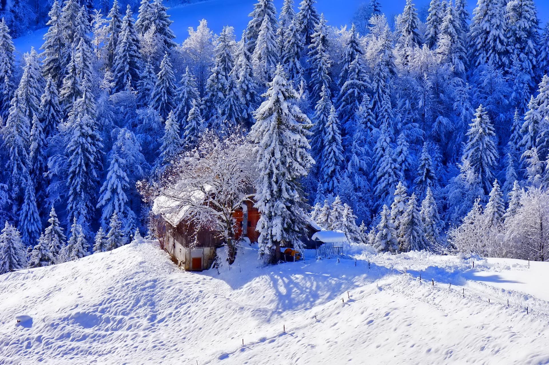 126928 скачать обои Зима, Домик, Природа, Деревья, Снег, Возвышенность - заставки и картинки бесплатно