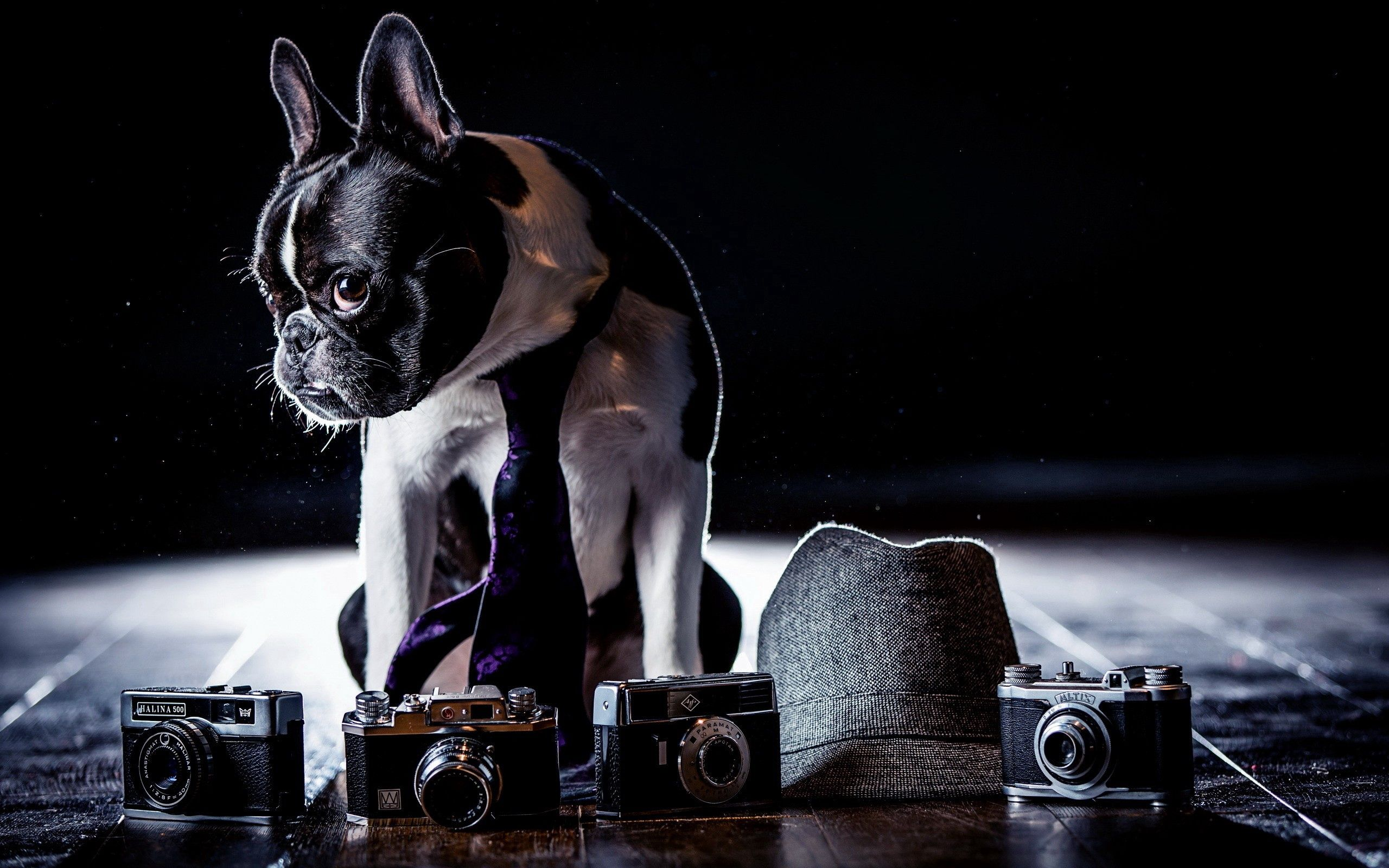 91623 download wallpaper Animals, Bulldog, Costume, Cameras, Shadow, Tie, Dog, Hat, Sight, Opinion screensavers and pictures for free