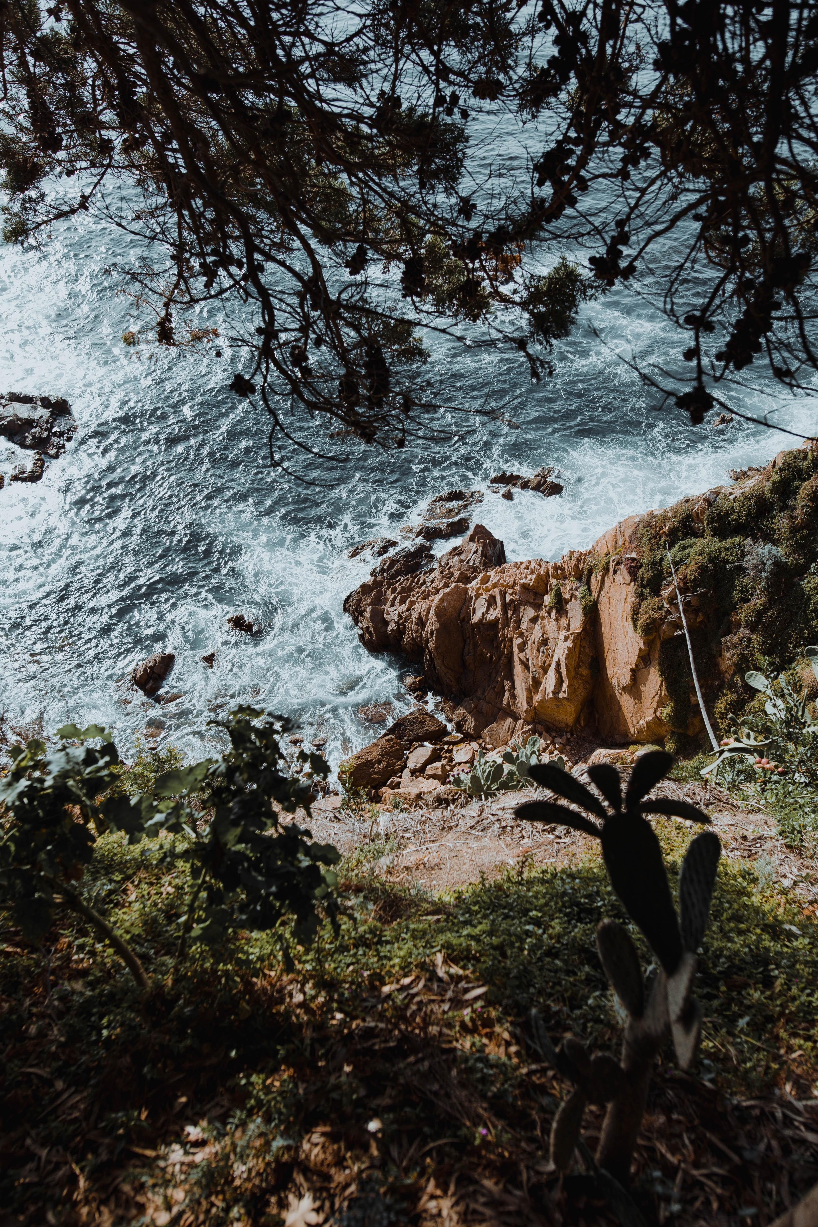 136845 descargar fondo de pantalla Naturaleza, Roca, Mar, Sucursales, Ramas, Cactus: protectores de pantalla e imágenes gratis