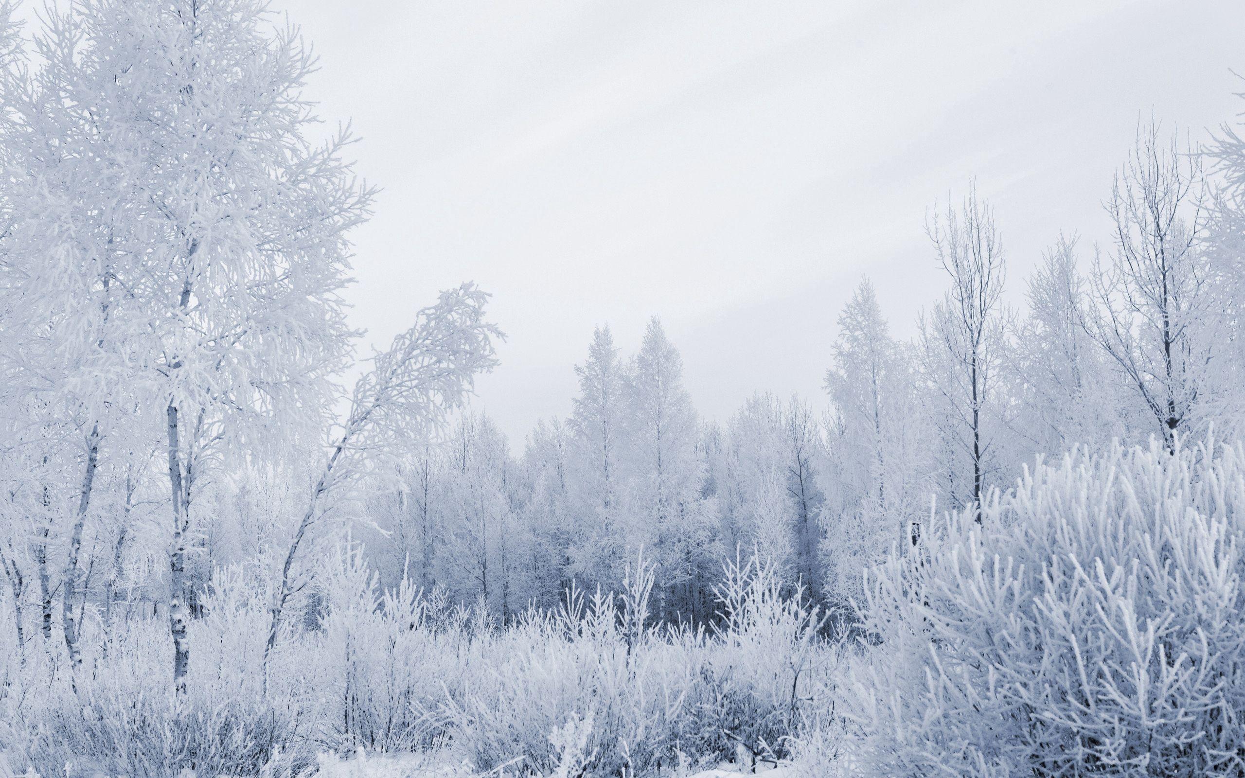 129123 descargar fondo de pantalla Naturaleza, Bosque, Escarcha, Pelo Canoso, Cabello Canoso, Invierno, Helada: protectores de pantalla e imágenes gratis