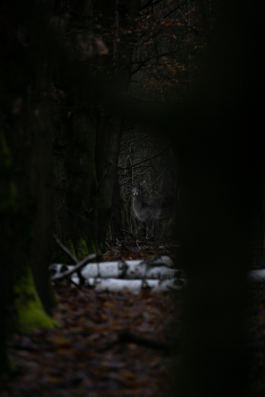 107328 скачать обои Животные, Лес, Деревья, Лань, Животное, Дикая Природа - заставки и картинки бесплатно