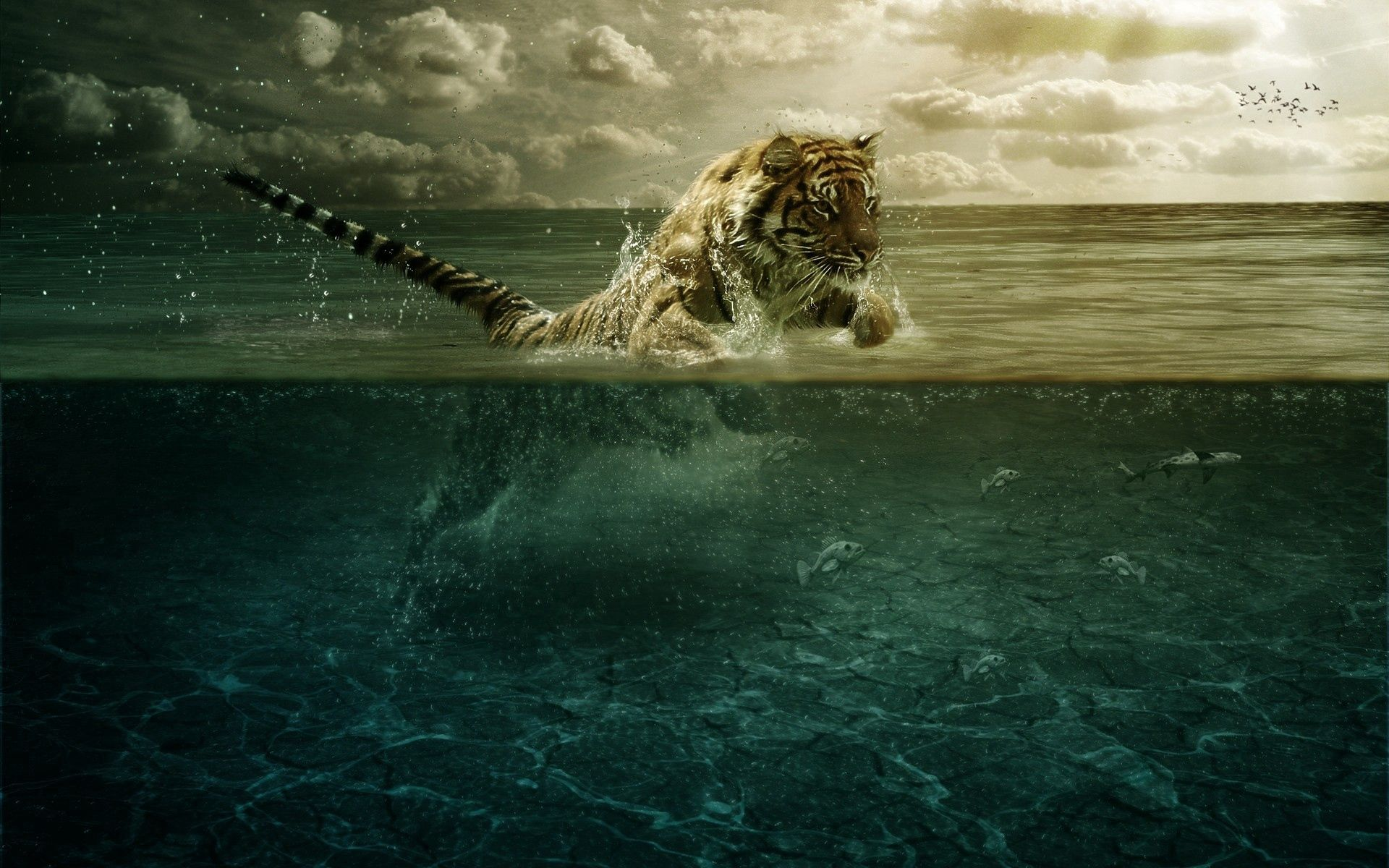 117972 download wallpaper Animals, Tiger, Bounce, Jump, Sea, Under Water, Underwater, Hunting, Hunt screensavers and pictures for free