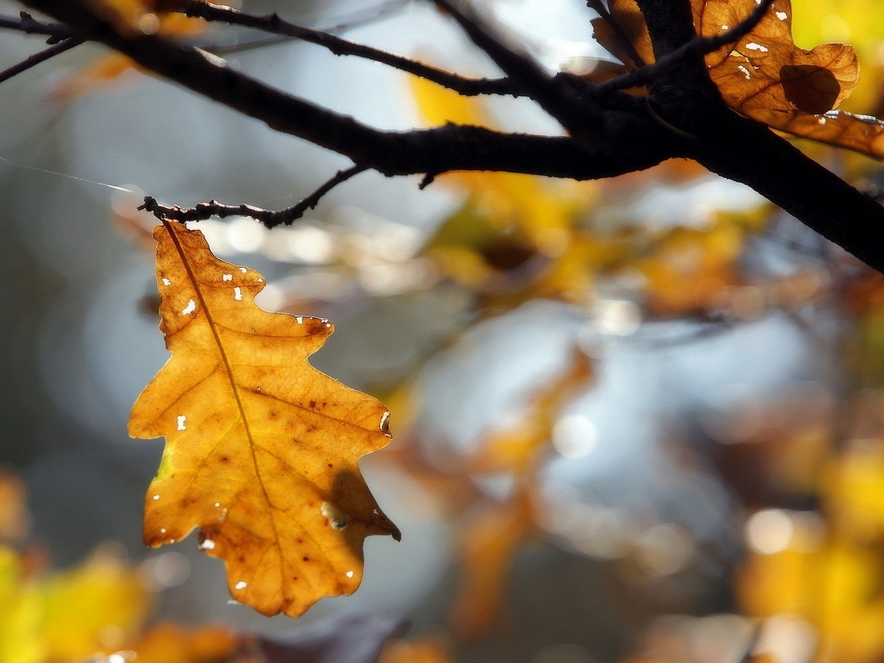 27546 download wallpaper Plants, Trees, Autumn, Leaves screensavers and pictures for free