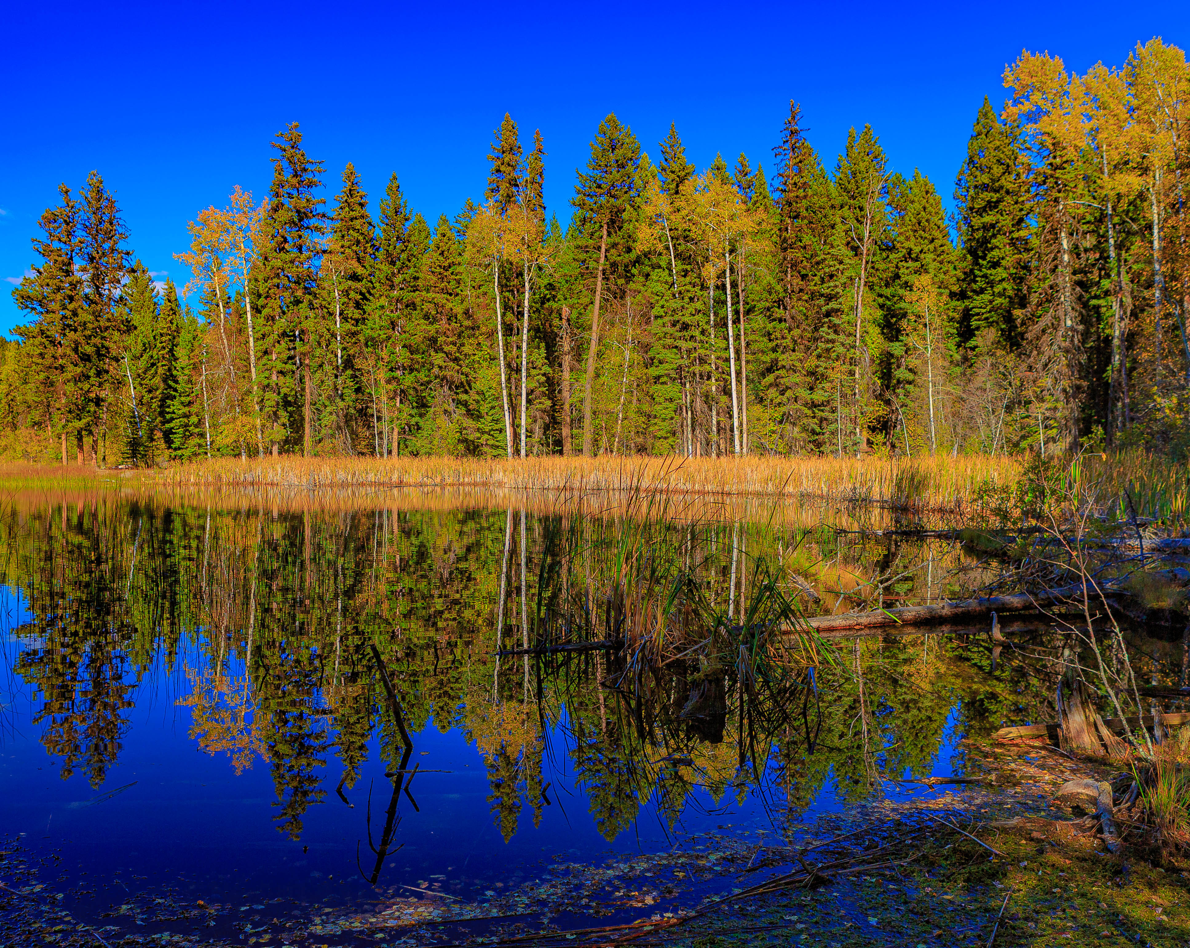 Download mobile wallpaper Landscape, Nature, Trees, Lake, Reflection, Forest for free.