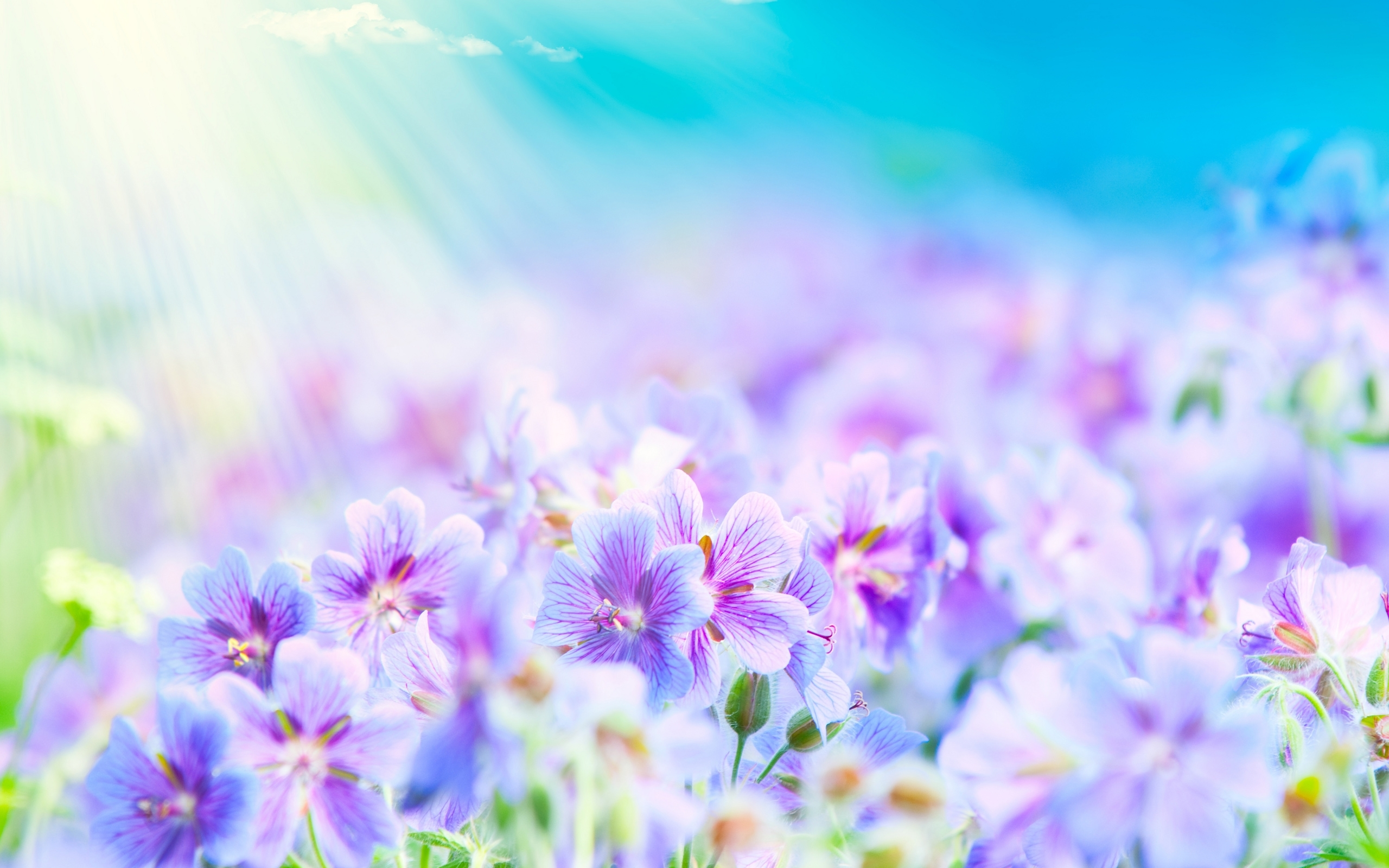 16141 Wallpapers and Background images on your desktop. Download Background, Plants, Flowers pictures on PC for free