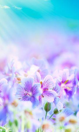 16141 скачать обои Растения, Цветы, Фон - заставки и картинки бесплатно