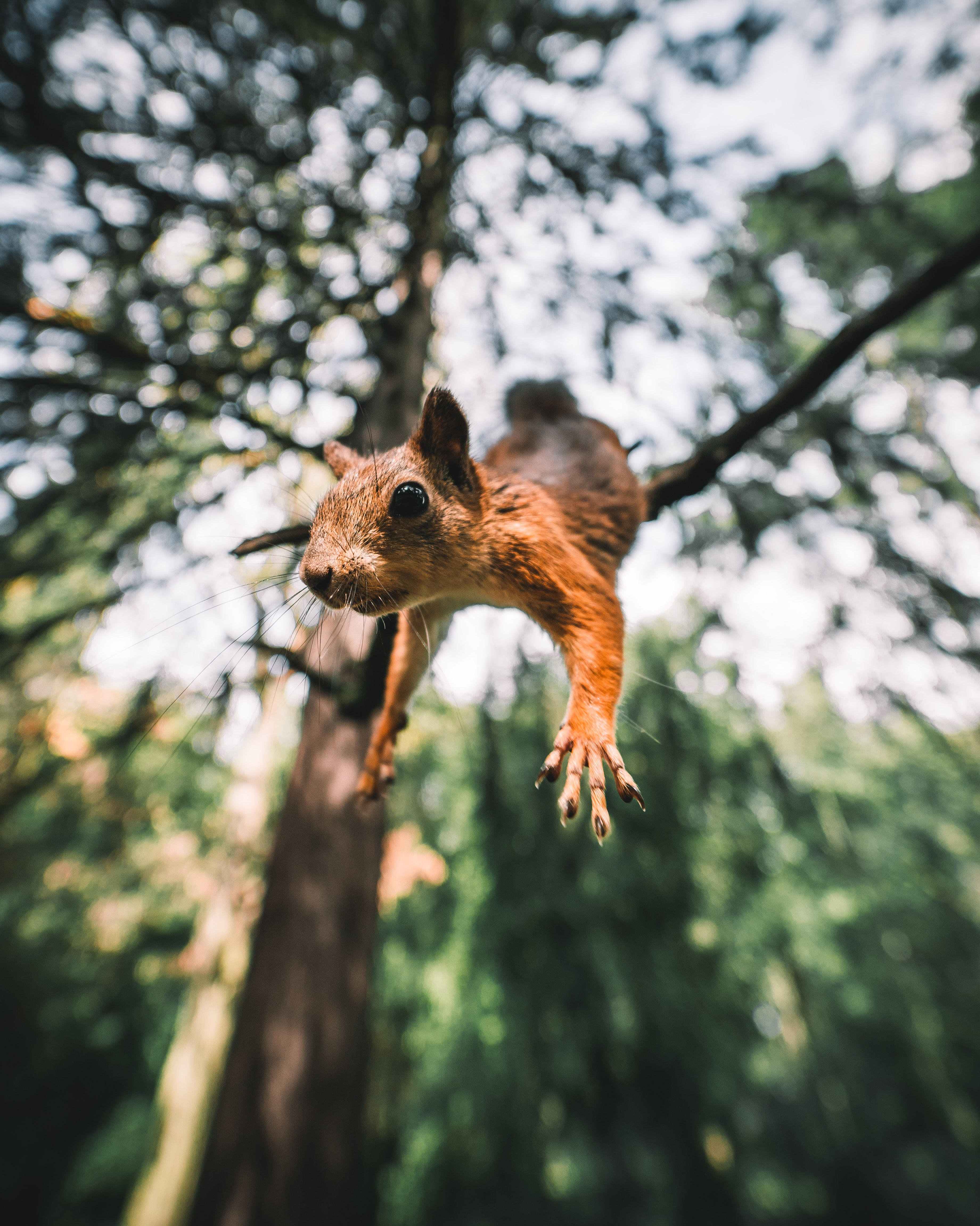 89836 download wallpaper Animals, Squirrel, Rodent, Funny, Paws, Bounce, Jump screensavers and pictures for free