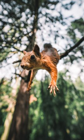 89836 Screensavers and Wallpapers Funny for phone. Download Animals, Squirrel, Rodent, Funny, Paws, Bounce, Jump pictures for free