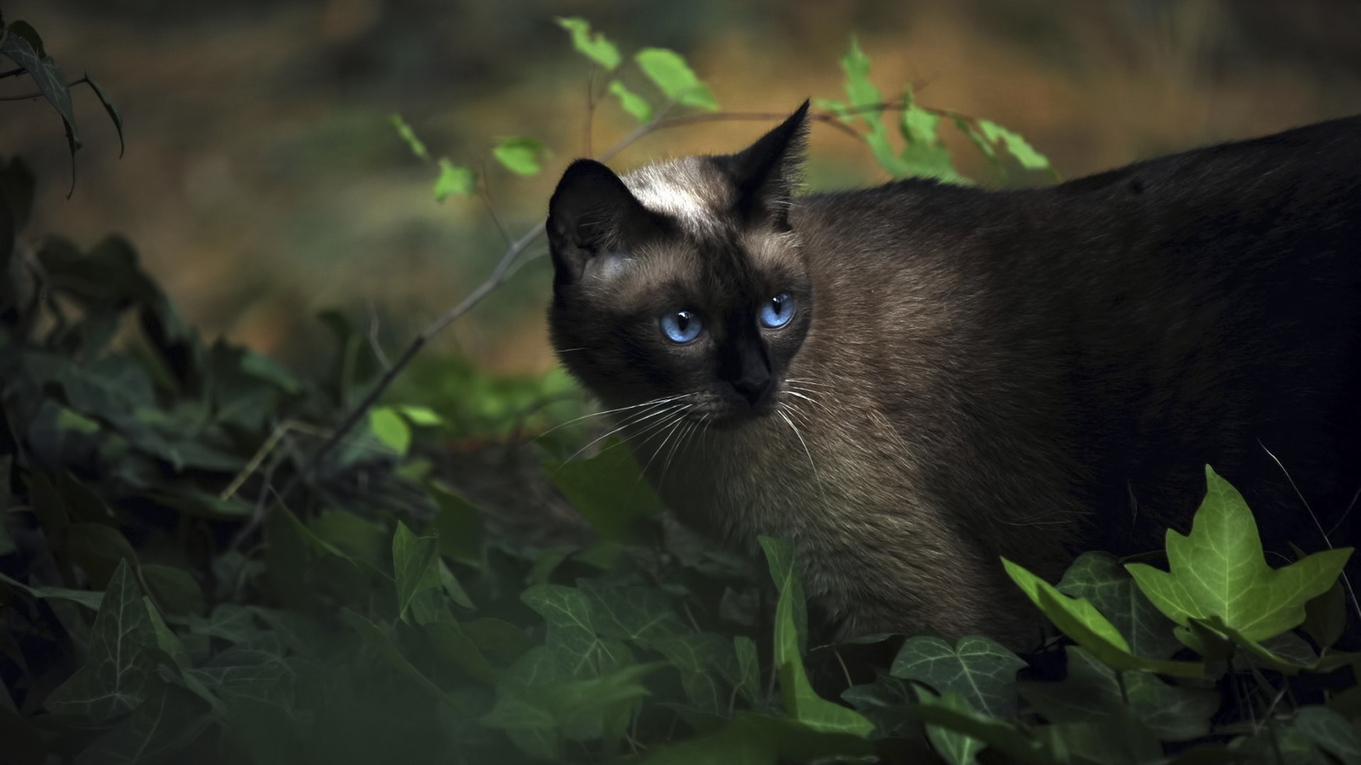 15933 download wallpaper Animals, Cats screensavers and pictures for free