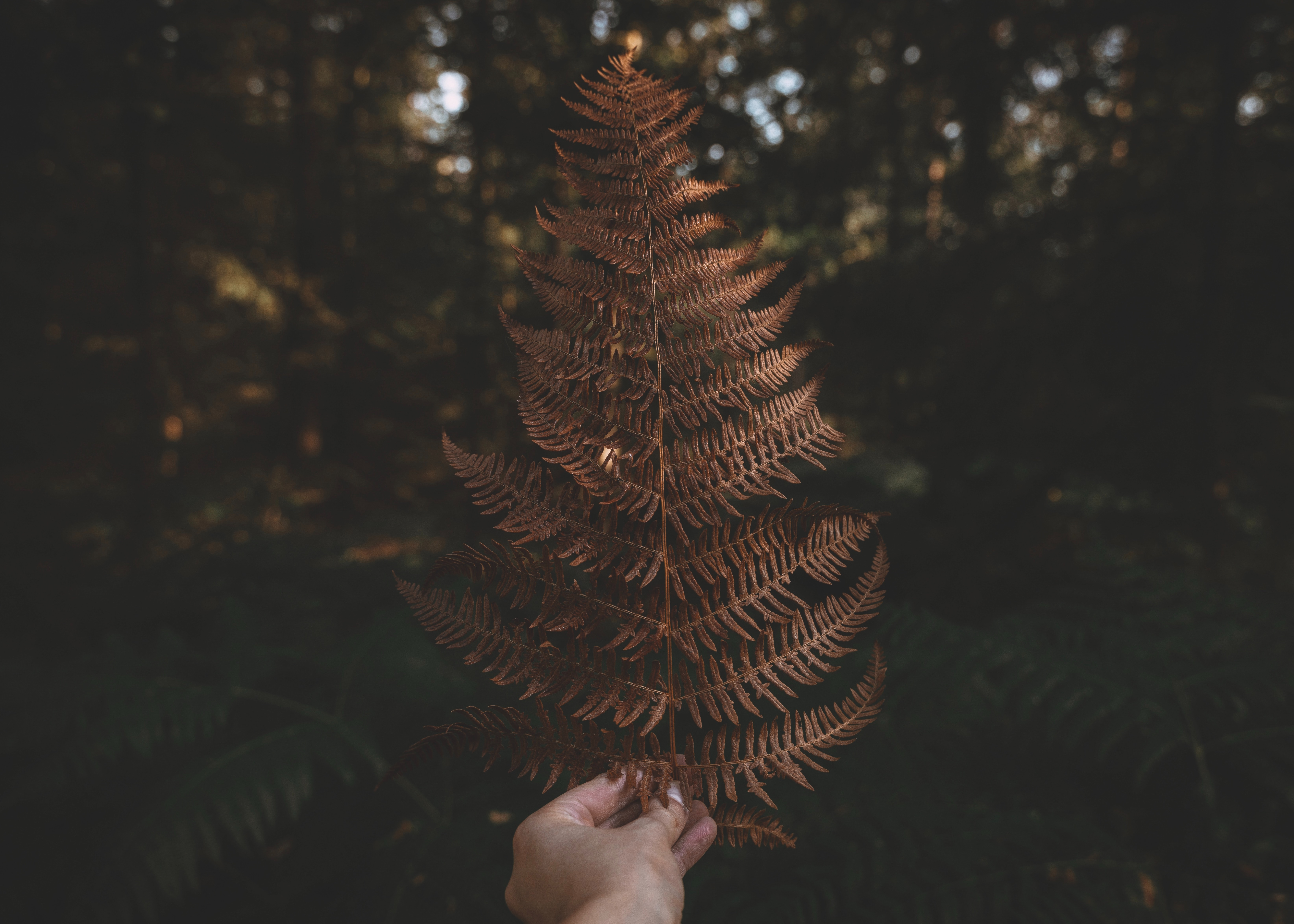 105340 download wallpaper Nature, Plant, Hand, Fern, Leaflet screensavers and pictures for free