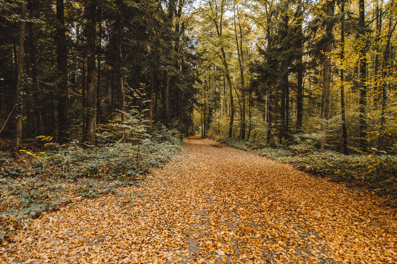 71151 скачать обои Деревья, Осень, Листва, Природа, Парк, Опавший - заставки и картинки бесплатно