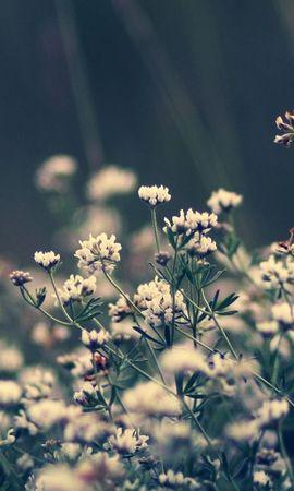 26575 скачать обои Растения, Цветы - заставки и картинки бесплатно