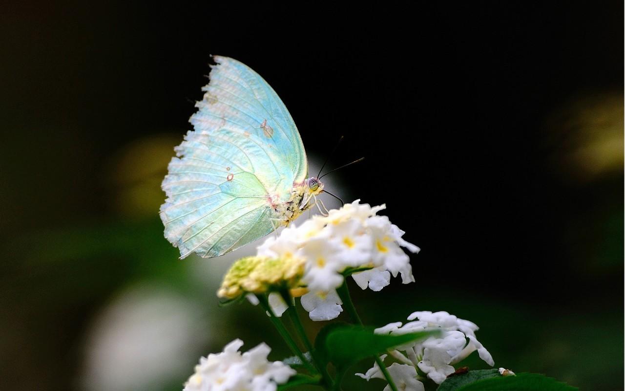 18579 скачать обои Бабочки, Насекомые - заставки и картинки бесплатно
