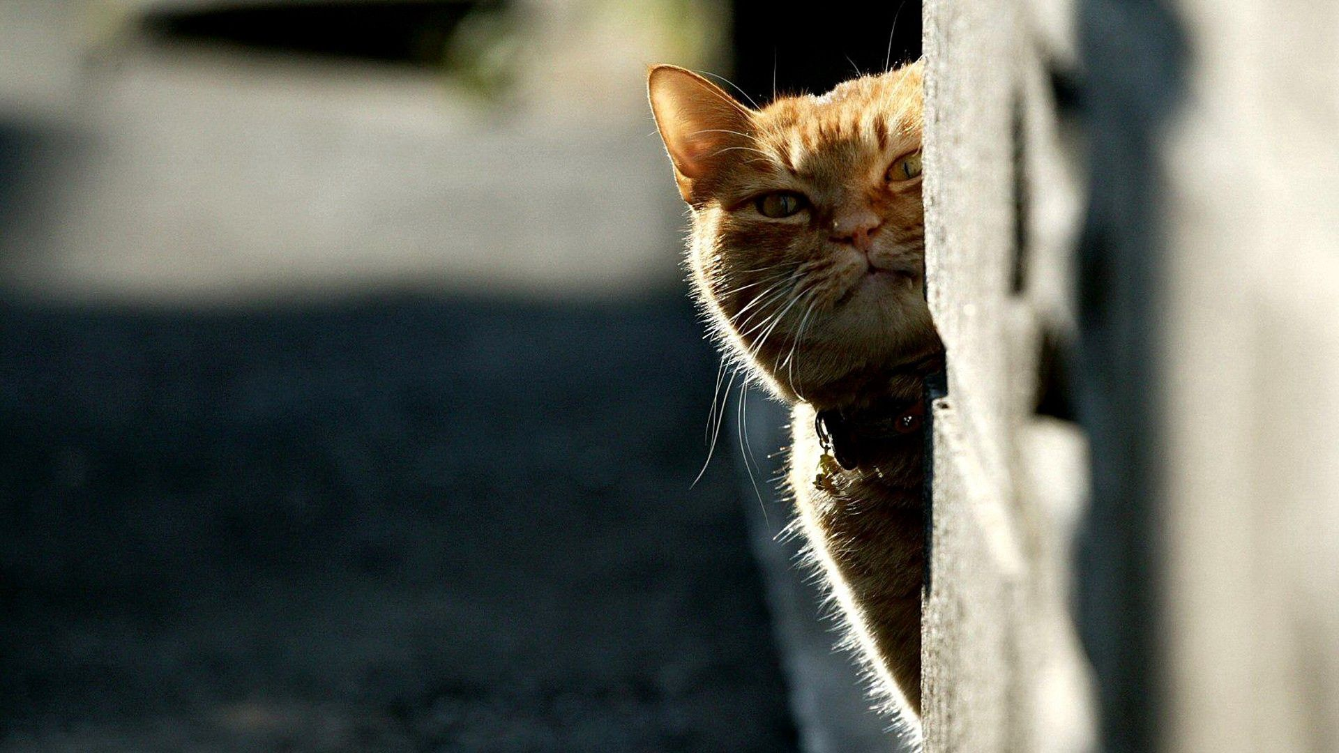 137181 download wallpaper Animals, Cat, Peek Out, Look Out, Shadow, Muzzle screensavers and pictures for free
