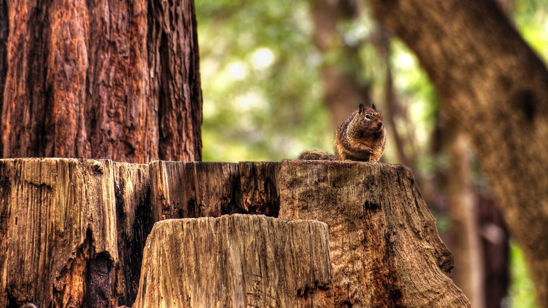 71973 download wallpaper Animals, Squirrel, Hemp, Sit, Animal, Forest screensavers and pictures for free