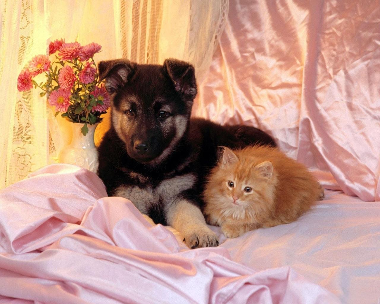 9358 скачать обои Собаки, Кошки (Коты, Котики), Животные - заставки и картинки бесплатно