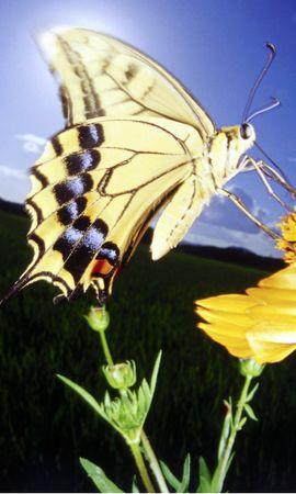 28943 Salvapantallas y fondos de pantalla Insectos en tu teléfono. Descarga imágenes de Mariposas, Insectos gratis