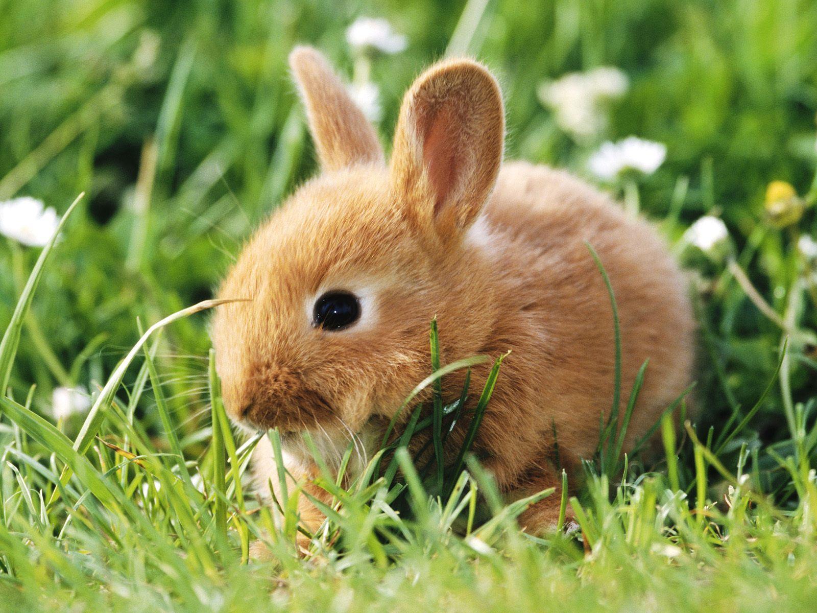 Handy-Wallpaper Tiere, Kaninchen kostenlos herunterladen.