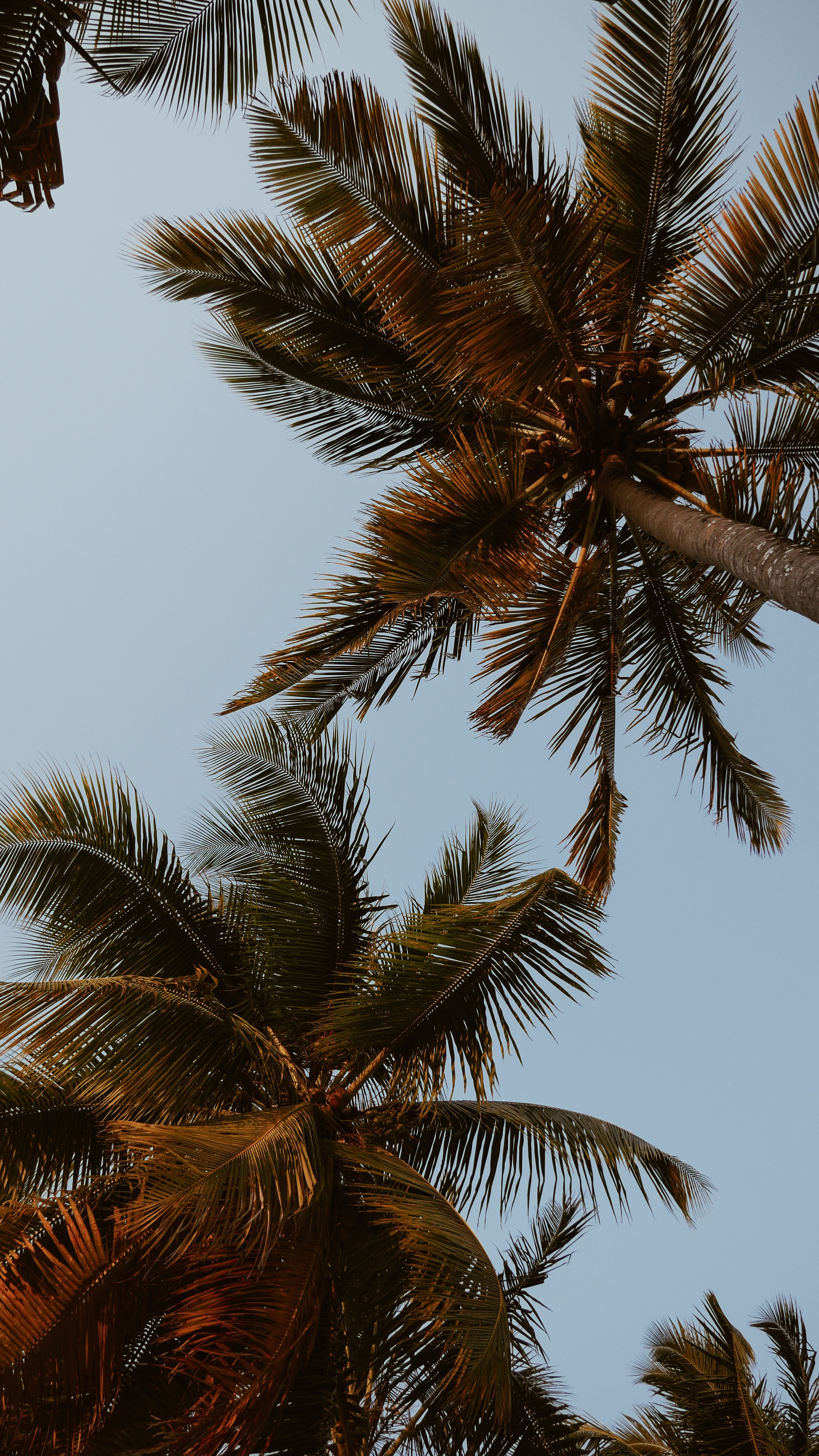 111239 download wallpaper Nature, Crowns, Crown, Branches, Leaves, Sky, Tropics, Palms screensavers and pictures for free