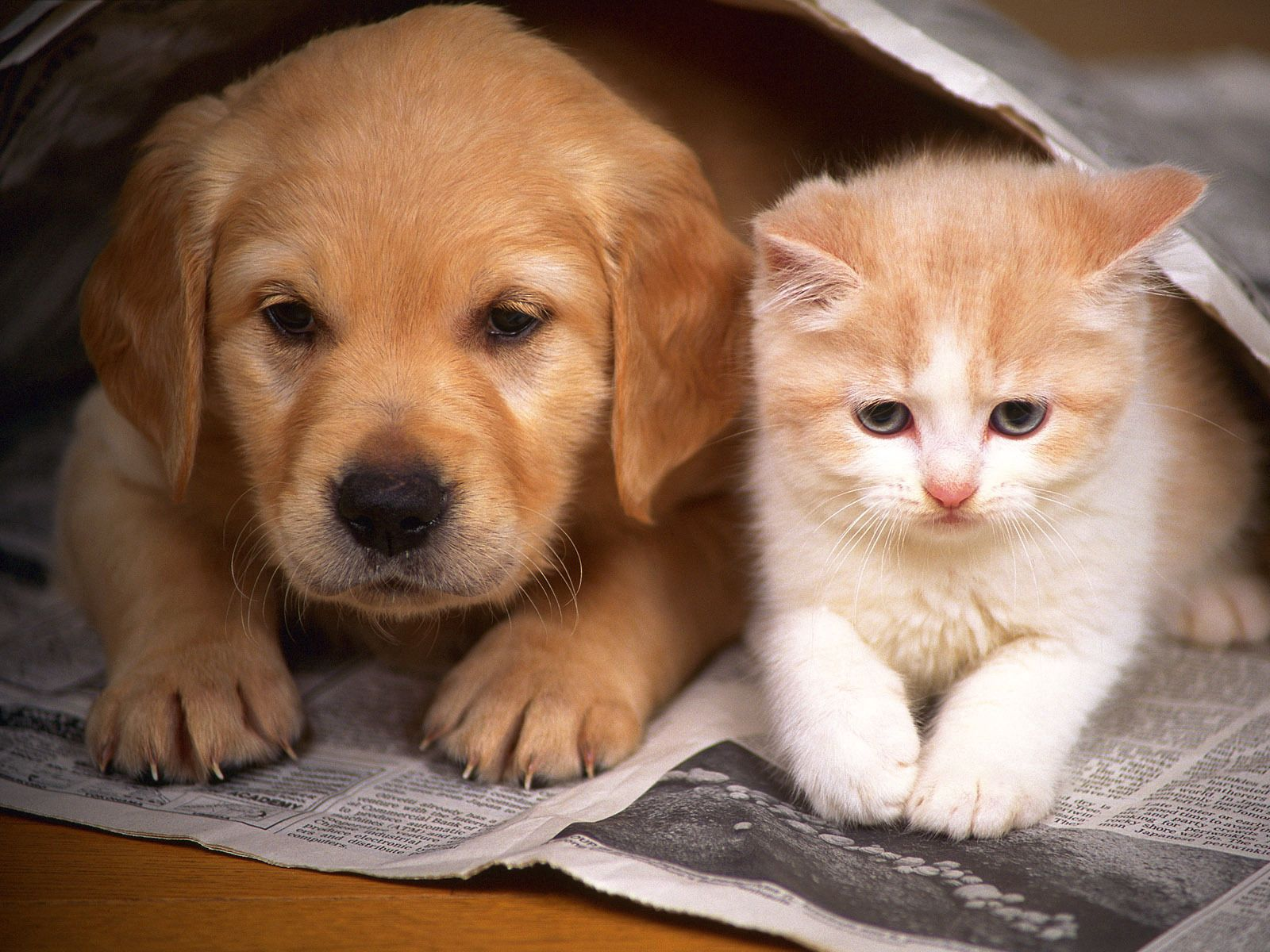 109578 download wallpaper Animals, Friendship, Kitty, Kitten, Couple, Pair, Hide, Puppy, Newspaper screensavers and pictures for free