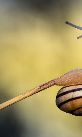 44065 Salvapantallas y fondos de pantalla Insectos en tu teléfono. Descarga imágenes de Insectos, Caracoles gratis