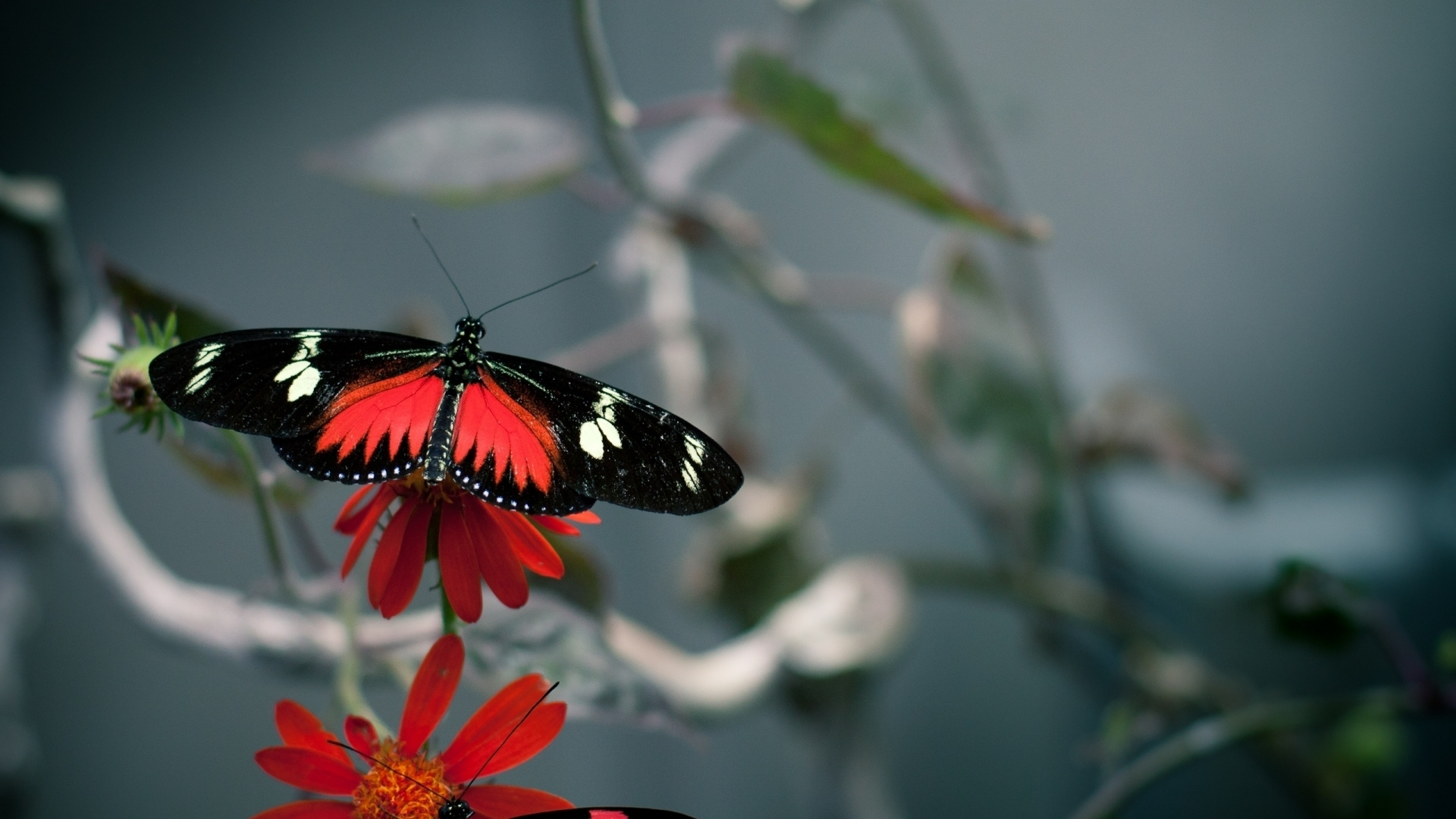 43624 скачать обои Животные, Бабочки - заставки и картинки бесплатно