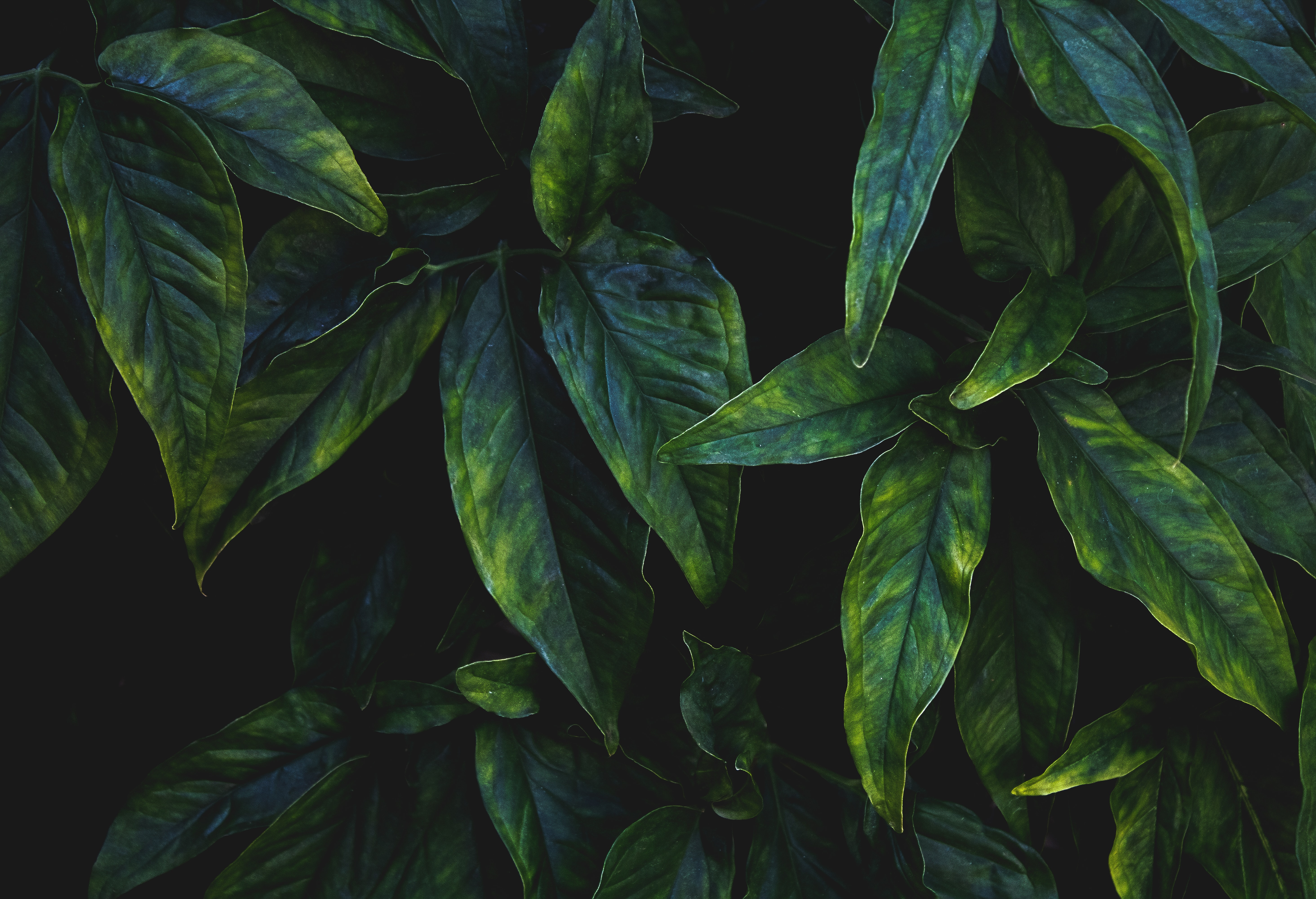 142685 download wallpaper Macro, Leaves, Branches, Veins screensavers and pictures for free