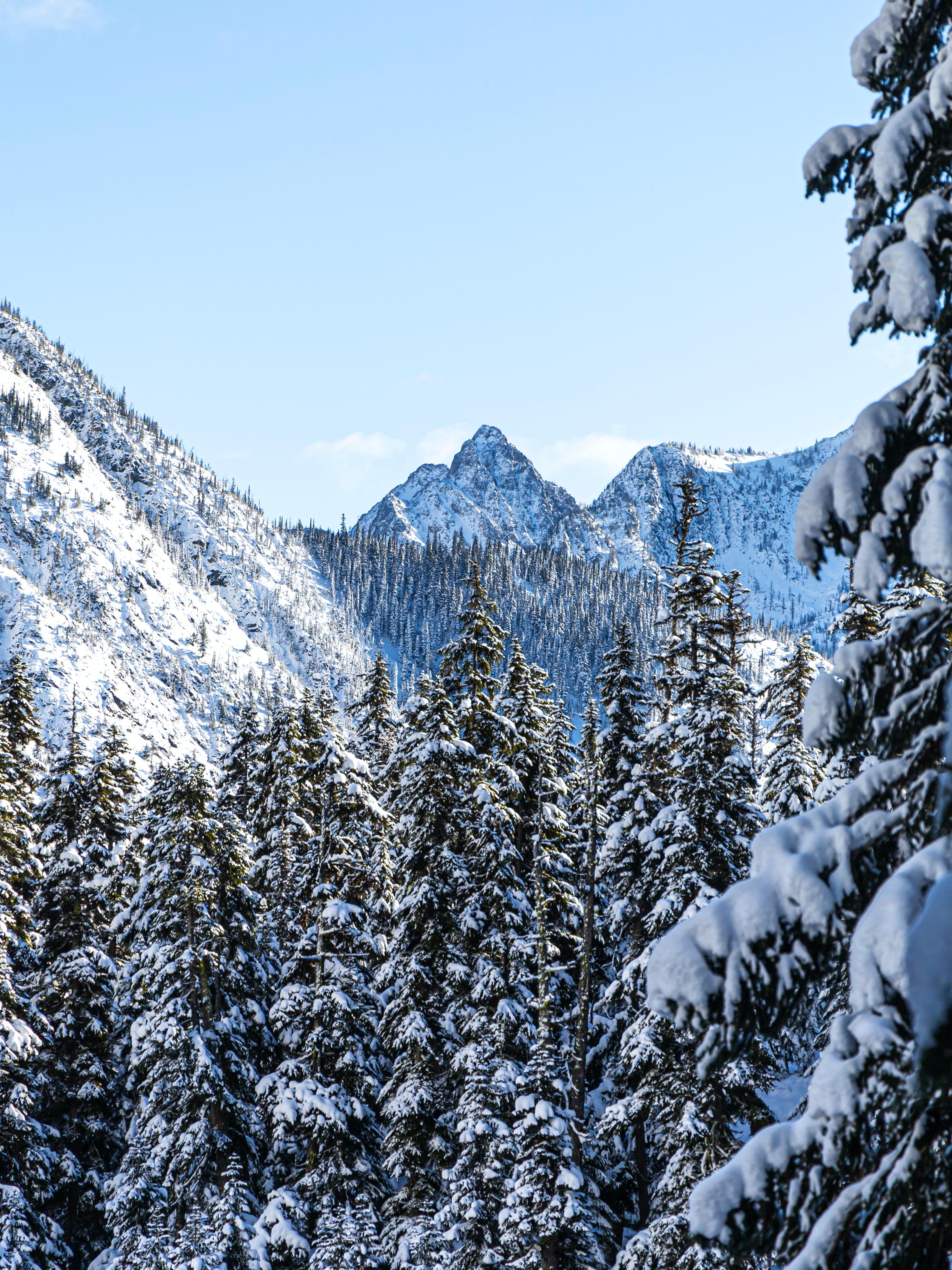 157995 скачать обои Природа, Снег, Деревья, Зима, Горы, Сосны - заставки и картинки бесплатно