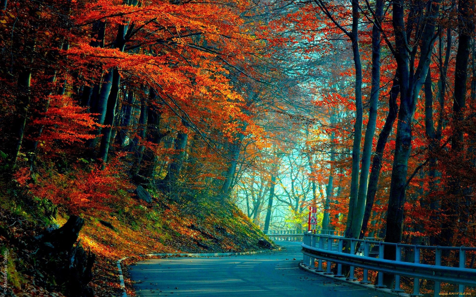 83056 Screensavers and Wallpapers Road for phone. Download Leaves, Nature, Trees, Autumn, Road pictures for free