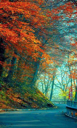 83056 Заставки и Обои Деревья на телефон. Скачать Природа, Осень, Дорога, Листья, Деревья картинки бесплатно