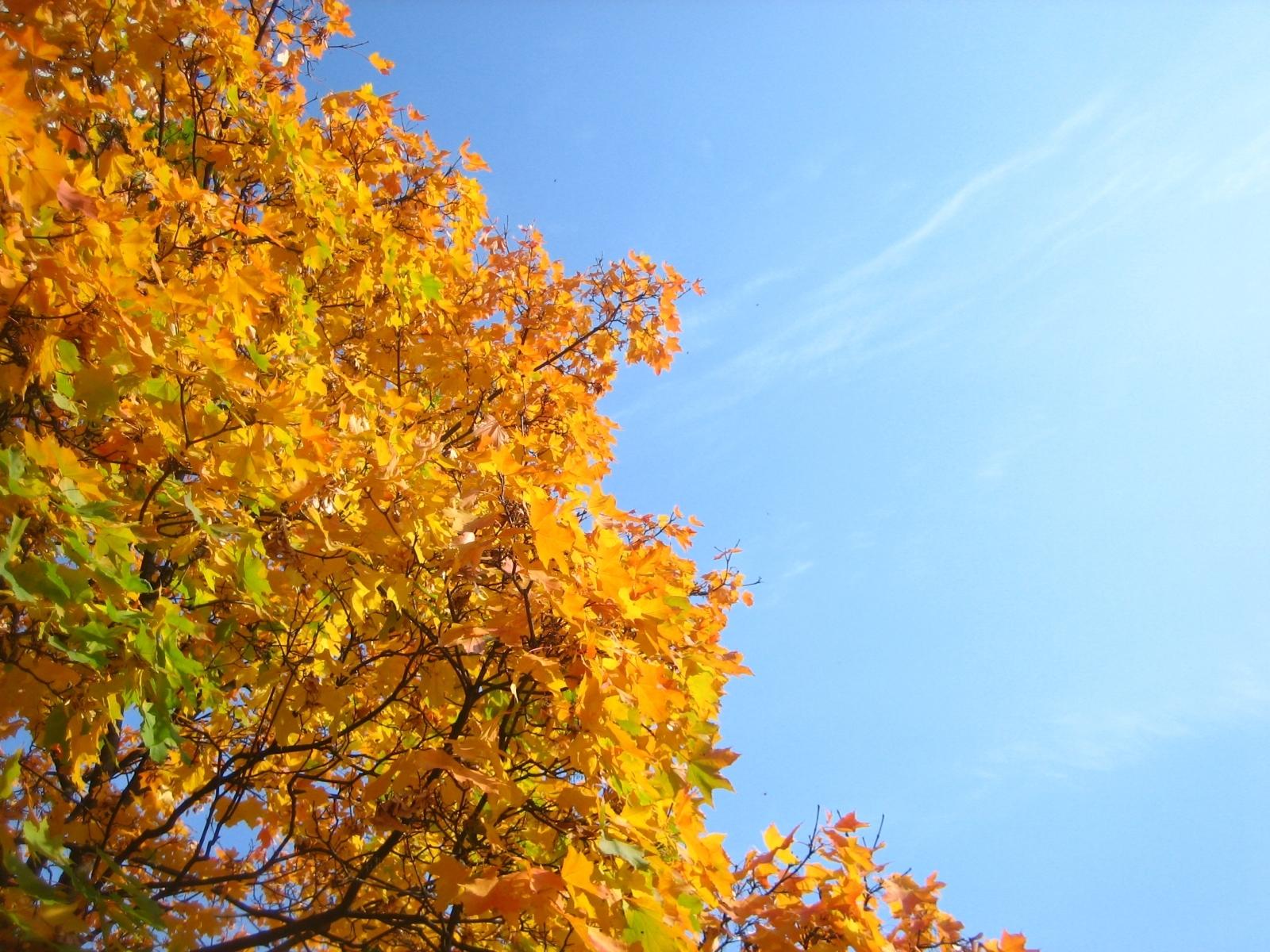 Скачать картинку Осень, Растения, Деревья в телефон бесплатно.