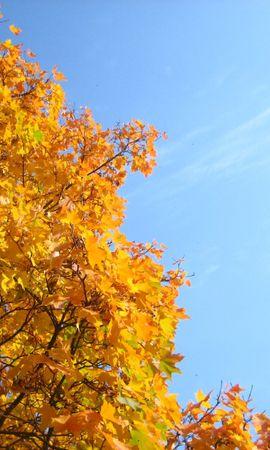 8106 скачать обои Растения, Деревья, Осень - заставки и картинки бесплатно