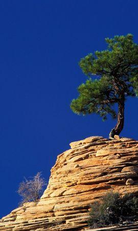26447 скачать обои Пейзаж, Деревья, Сосны - заставки и картинки бесплатно