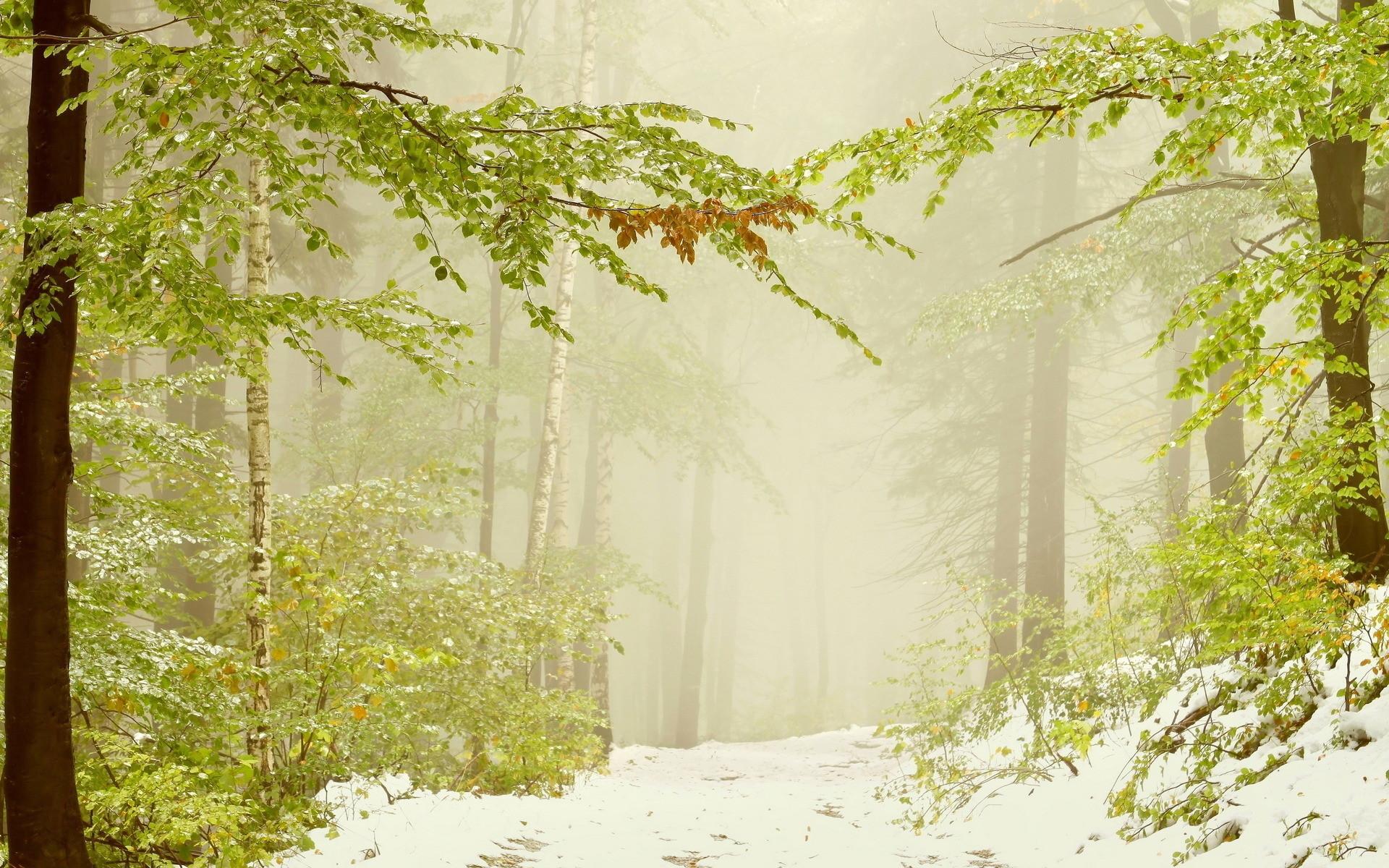 21990 скачать обои Пейзаж, Деревья, Дороги, Снег - заставки и картинки бесплатно