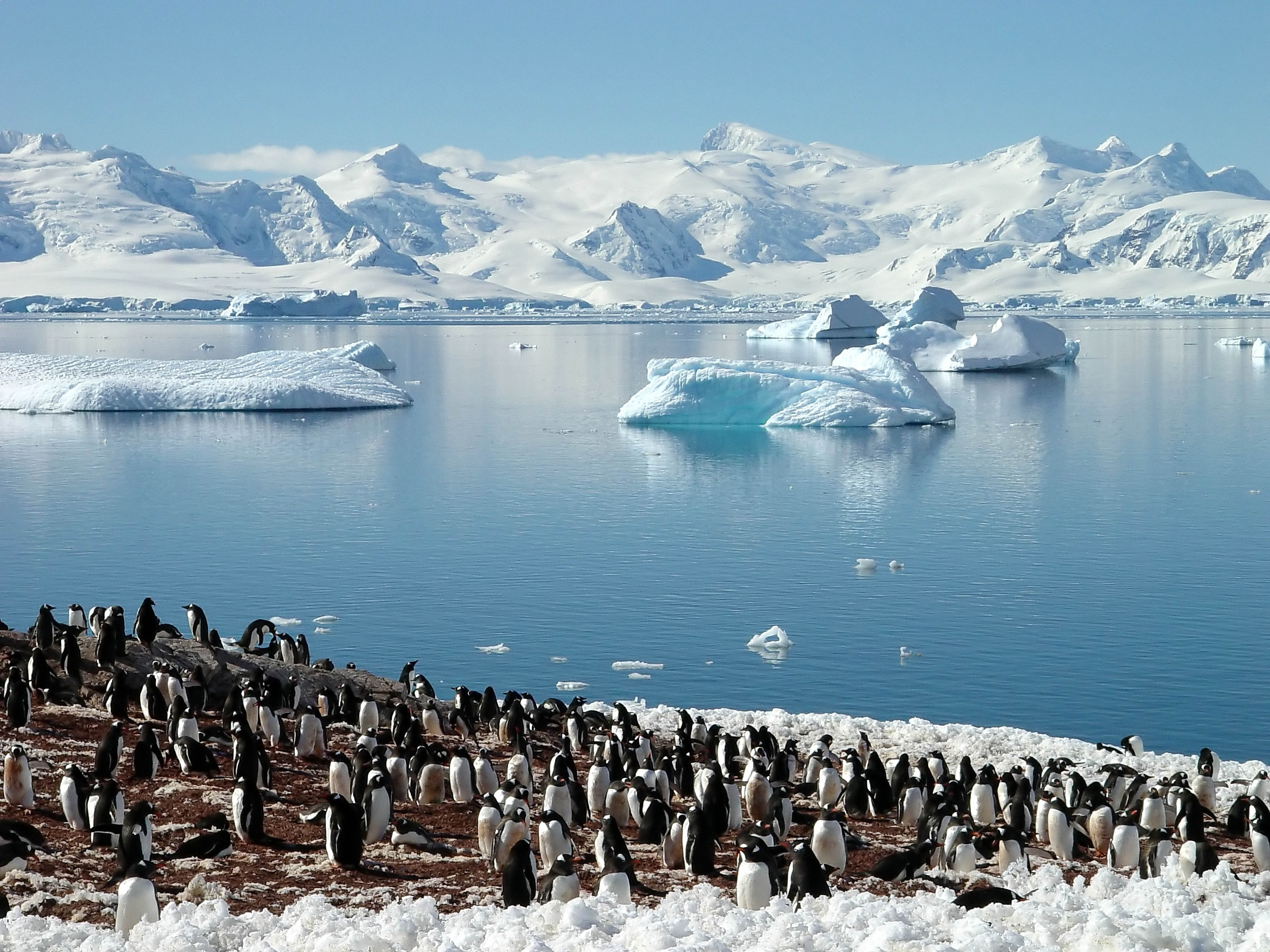 114563 download wallpaper Animals, Pinguins, Sea, Flock, Spring, Glaciers, North screensavers and pictures for free